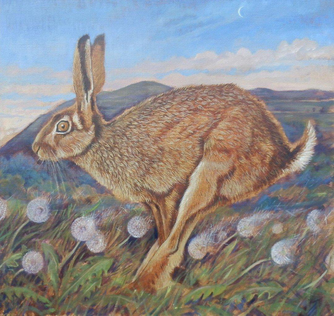 Running Hare, Hambledon Hill